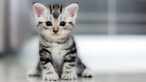 US-Bürger bekommt 16 Jahre Haft für 21 ermordete Katzen