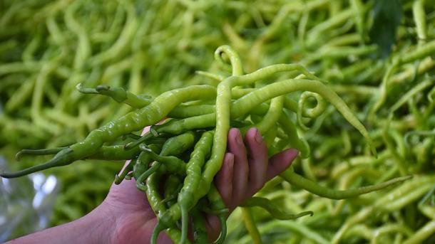 Turquie: le piment vert turc dans les cuisines du monde, l'exportation en hausse de 36%