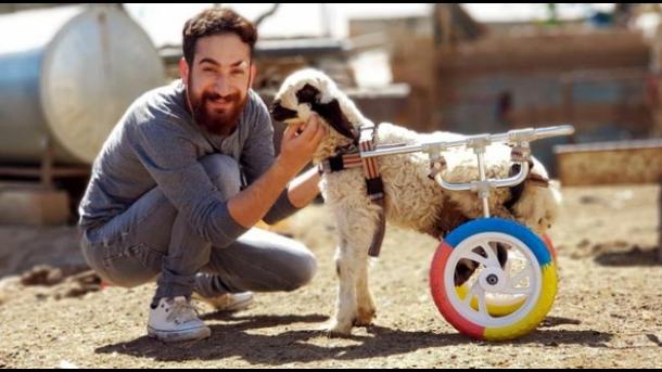 猫・犬・カメ・・・「命の修理屋さん」ハサン・クズルさん 300匹以上の動物の命を救う | TRT  日本語