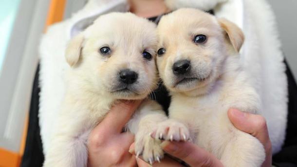 ペットショップから動物が消える! ペットショップでの動物販売禁止へ | TRT  日本語