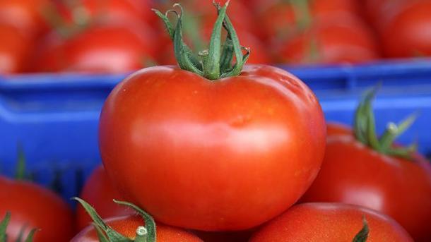 Rusia do të heqë kufizimet ndaj importit të domates turke   TRT  Shqip