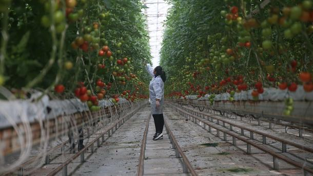 Turqia e dyta në Evropë dhe e katërta në botë për serra bujqësore | TRT  Shqip