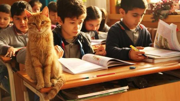 3年C組に猫の「トムビ」が帰ってきた! | TRT  日本語