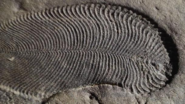 bilinen en eski hayvan fosili bulundu.jpg