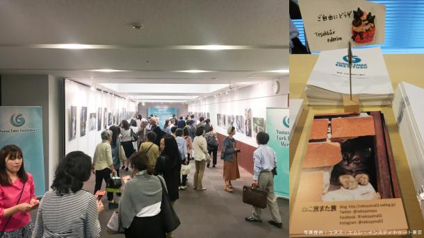 トルコでの猫との素敵な出会いをシャッターに 「ねことるこねこ」写真展 東京で開催 | TRT  日本語