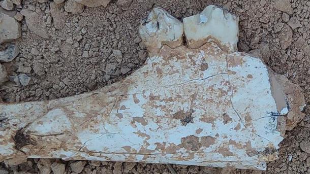 A e dini se në Denizli ka shumë fosile që hedhin dritë mbi historinë? | TRT  Shqip