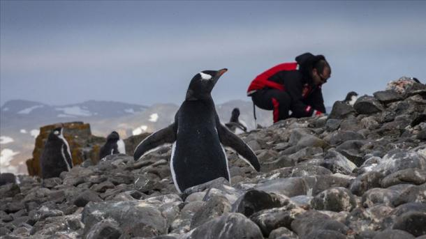 Antarktikadan alınğan ürnäklärdä - yaña bakteriya | TRT  Tatarça