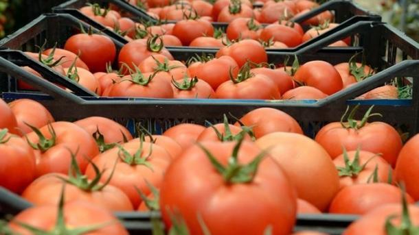 Turqia rriti eksportin e domateve në Rusi pavarësisht kuotës së ulët | TRT  Shqip