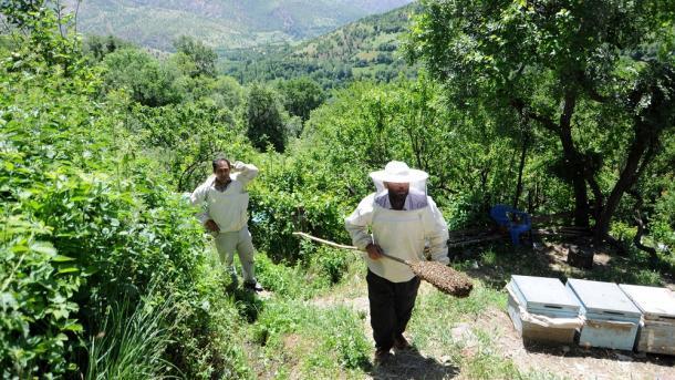A e dini se mjalti i prodhuar në Rrafshnaltën Anzer të Detit të Zi nuk ka të krahasuar në botë?   TRT  Shqip