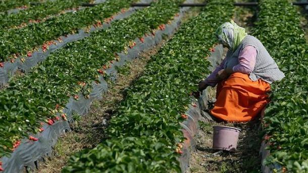 Turqia për nga niveli i prodhimit bujqësor radhitet e dyta në Evropë | TRT  Shqip