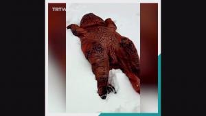 Dinosaur Rexy Menikmati Salji di Madrid