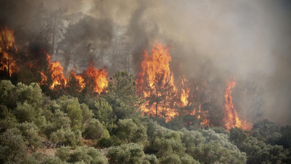 Pakdemirli: Pod kontrolom 217 od 223 požara koja su izbila u 47 provincija