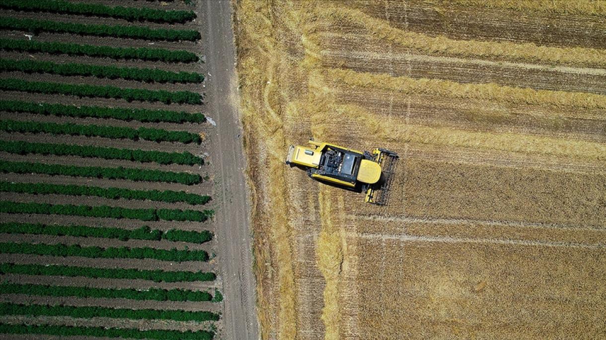 Turska zabilježila historijski uspjeh na polju izvoza poljoprovrednih proizvoda