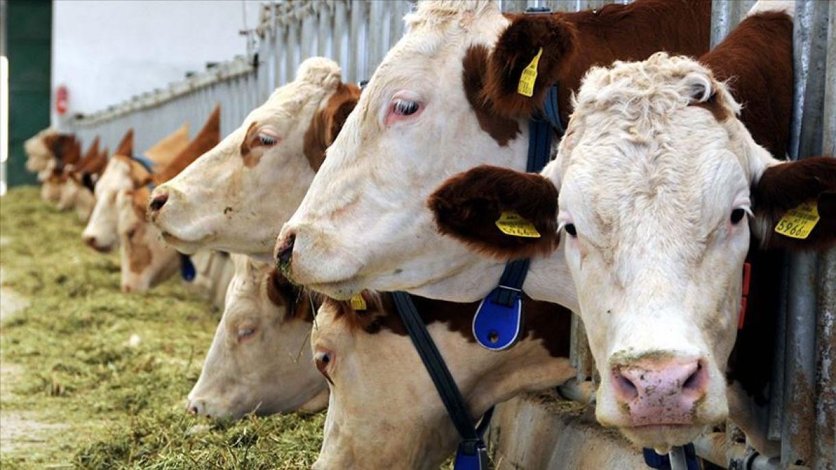 NZ、家畜の海路輸出を禁止