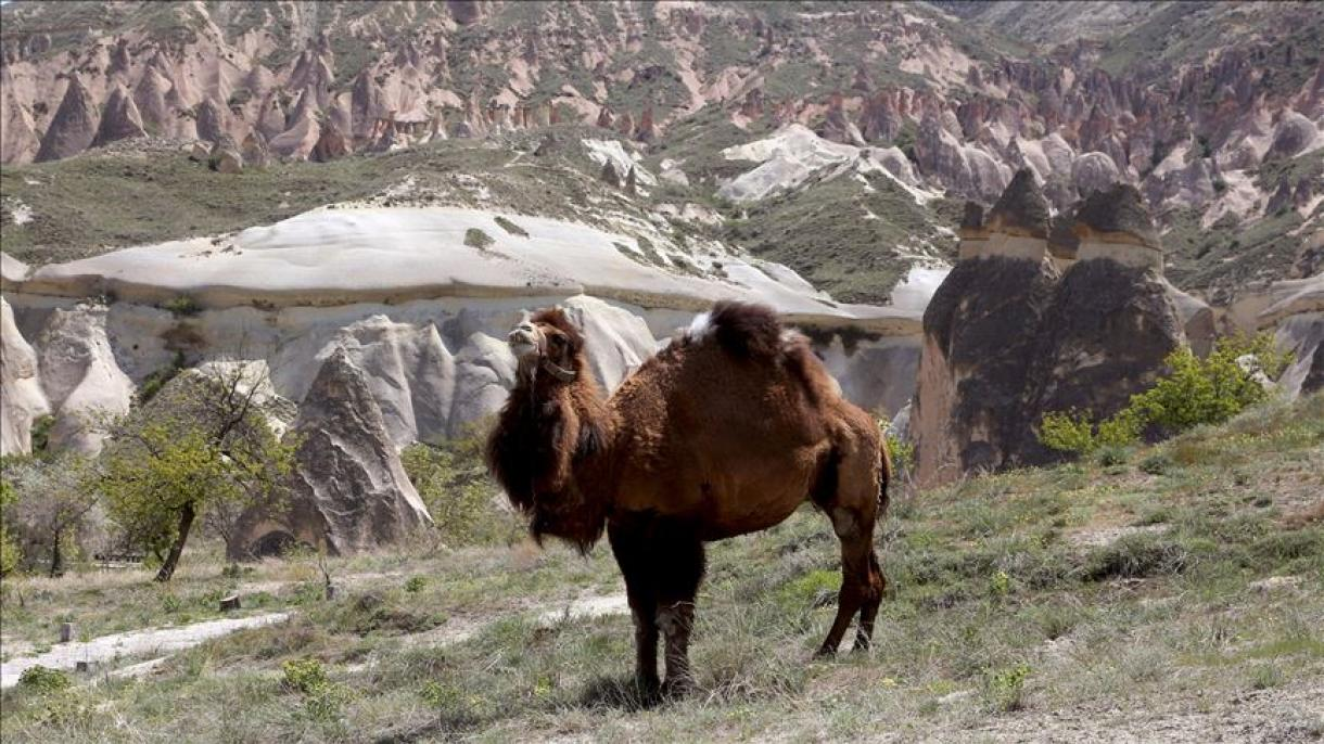 Turquie : Au bonheur des chevaux et des chameaux en Cappadoce