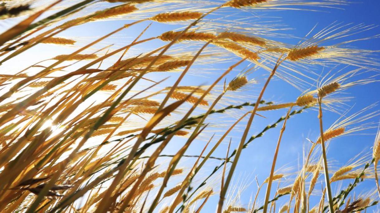 Turqia, e 7-ta në botë për prodhimin bujqësor organik