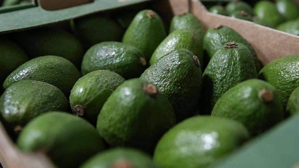 Турция изнася авокадо за 33 страни