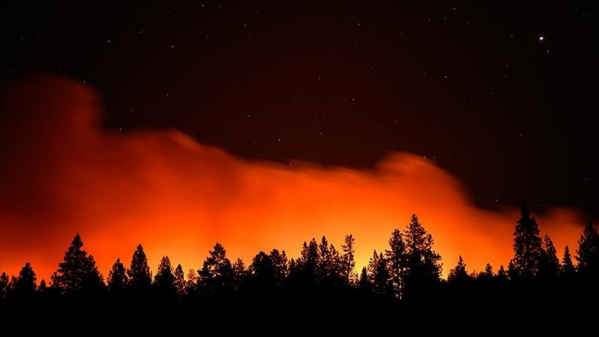 U šumskim požarima poginule 42 osobe, među njima i 25 vojnika